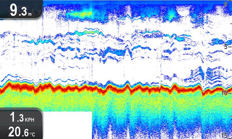 King fish on sounder